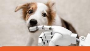 intelligenza artificiale seleziona cani guida